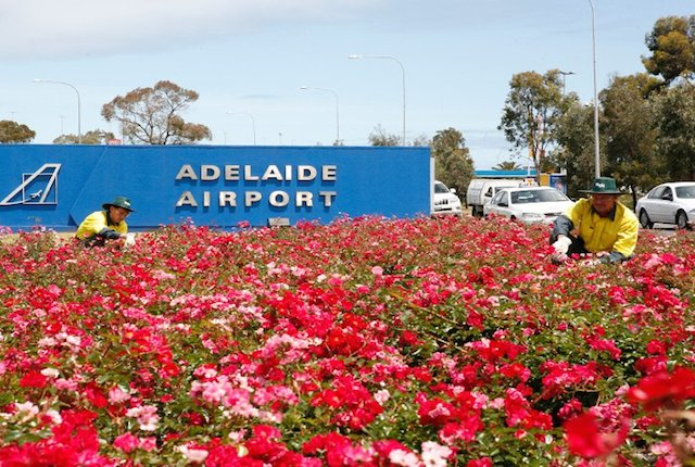 10 People You'll Meet at Adelaide Airport
