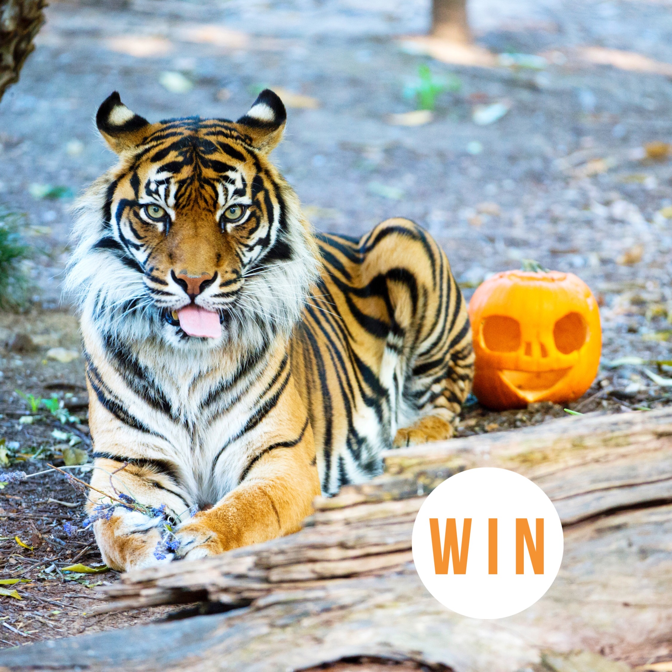 WIN a family pass to Boo at the Zoo at the Adelaide Zoo